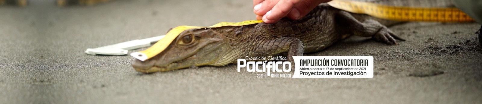 Abrimos convocatoria para proyectos de investigación Expedición Científica Pacífico 2021-II Bahía Málaga
